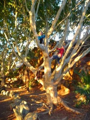 up a tree