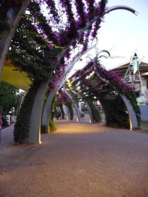 bouganvillia walkway